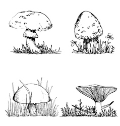 Ink drawing mushroom and grass vector