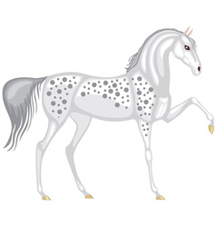Beautiful gray in the dappled horse vector