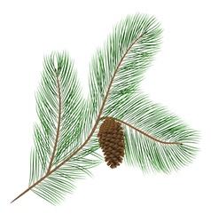 Pine cone with pine needles vector