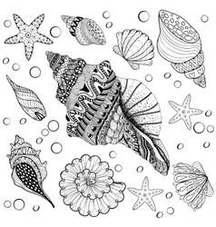 Set shells zentangle seeshell for adult vector