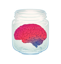 Human brain in glass jar isolated vector