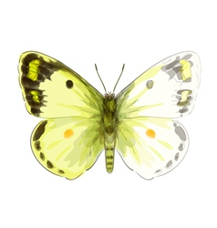 Butterfly Colias Erate vector image