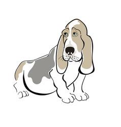 dog basset haund vector image
