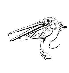 Pelican vector