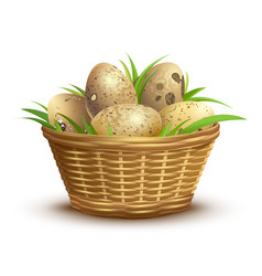 Quail eggs full wicker basket vector