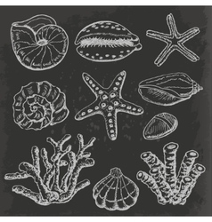 Collection of sea shells coral and vector