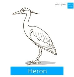 Heron learn birds coloring book vector