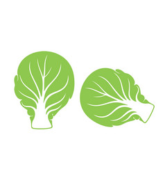 Brussels sprout vector