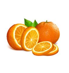 Oranges vector