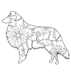 Collie dog colring vector