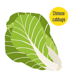 chinese cabbage flat style for markets farms and vector image