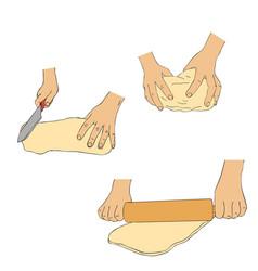 Hands knead dough vector