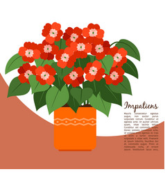 impatiens plant in pot banner vector image vector image