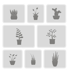 monochrome set with house plants icons vector image