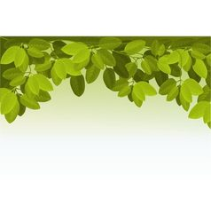 Nature background with ivy leaves vector image vector image