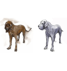Great dane german mastiff - an hand drawn vector
