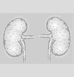 kidneys internal organ men 3d low poly geometric vector image vector image