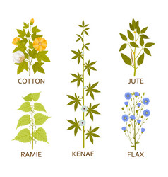 Legumes plants with leaves pods and flowers vector