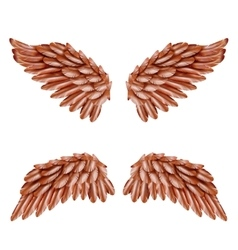 Bird Wing Set vector image vector image