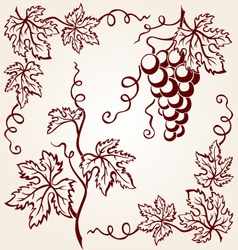 set from vine vector image