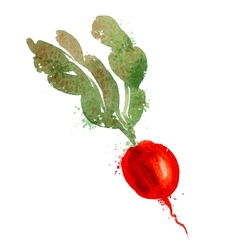 radish logo design template vegetables or vector image