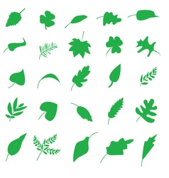 Various Leaves Silhouettes vector image vector image