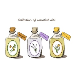 Health and nature collection argan tree vector