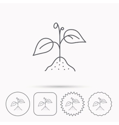 Plant with leaves icon agriculture sign vector