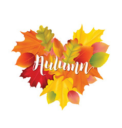 colorful autumn leaves design vector image vector image