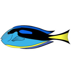 Butterfly blue fish vector