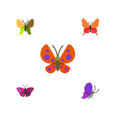 Flat moth set of moth beauty fly summer insect vector
