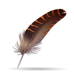 Isolated feather on white background vector