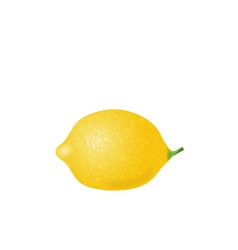 Photorealistic lemon isolated vector