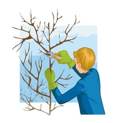 Young man trimming a tree with garden clippers vector