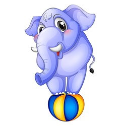 An elephant above the bouncing ball vector