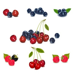 mega set of berries vector image vector image