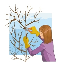 Young woman trimming a tree with garden clippers vector