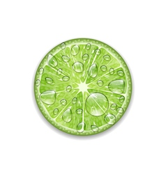 Lime with transparent droplets vector
