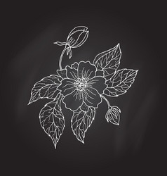 Hand drawing peony flower vector