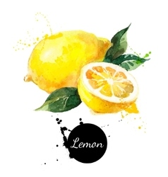 Hand drawn watercolor painting lemon on white vector image