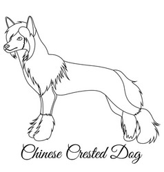 Chinese crested dog outline vector