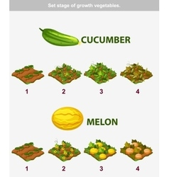 stage of growth vegetables Cucumber and melon vector image