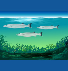 Three fish swimming under the sea vector