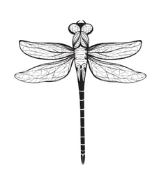 Dragonfly insect black inky drawing vector