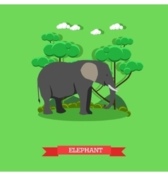 Zoo concept banner wildlife elephant animal vector