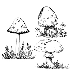 Ink drawing poisonous mushrooms and grass vector