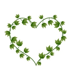 Ivy vine in a beautiful heart shape vector