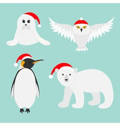 Arctic polar animal set White bear owl king vector image vector image