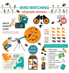 Bird watching infographic template vector image
