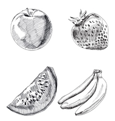 Collection of highly detailed hand drawn fruits vector image vector image